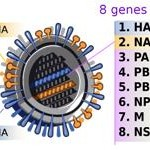 h1n1_influenza_virus_genetic
